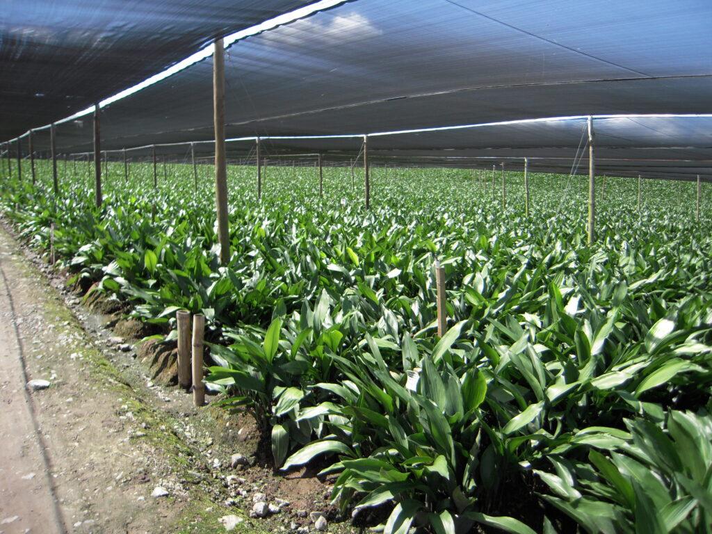 Farm El Salvador